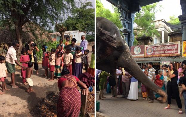 indienelefant
