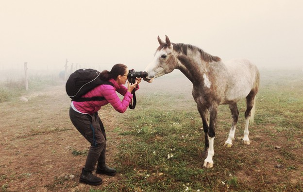 horsebook1